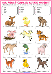 Baby Animals ESL Vocabulary Matching Exercise Worksheet