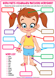 Body Parts ESL Matching Exercise Worksheet For Kids