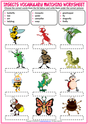 Insects ESL Printable Vocabulary Worksheets