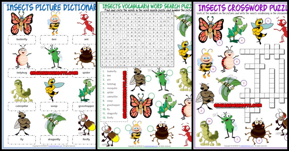Insects Esl Vocabulary Worksheets